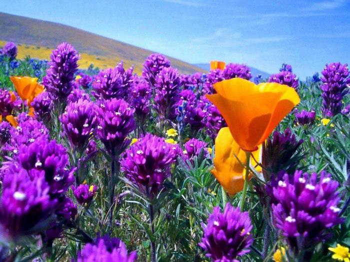 Значение сна сажать цветы 52