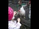 кормит курочек