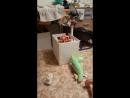 кошенька и новенькие коробочки