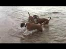 Один год из жизни желтых собак Часть 4