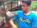 Смешные видео обезьян!