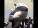 кунг фу панда 7