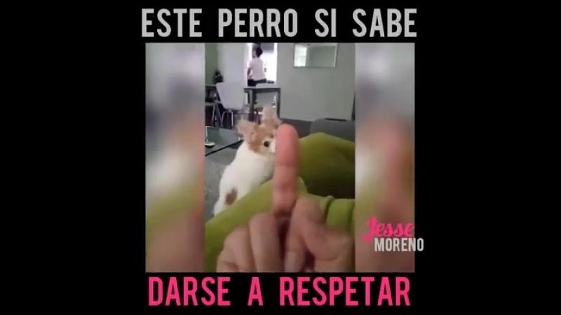 Este perro si sabe darse a respetar