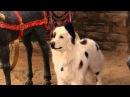 Собака точка ком (Сезон 3 Серия 6)
