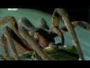 Войны жуков гигантов Monster bug wars 09