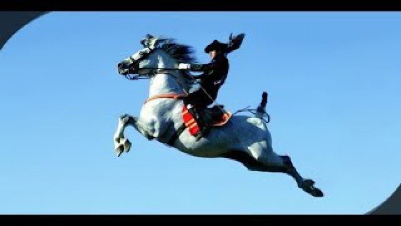 Фантастические примеры самых послушных и тренированных лошадей