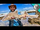 ПОЙМАЛ АКУЛУ ГОЛЫМИ РУКАМИ.Капская тройнозубая акула.Brave Wilderness на русском