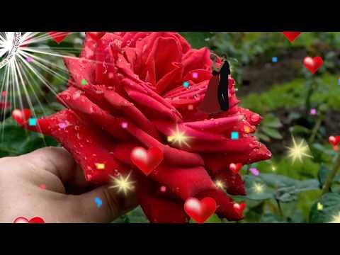 💋Очень красивое видео поздравление с Днем Рождения женщине💋 🎼НОВИНКА🎼