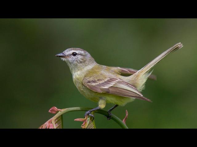 О перелетных птицах детям