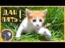 Рыжик и новый котенок Мими гуляют по травке