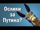 Ослики за Путина?