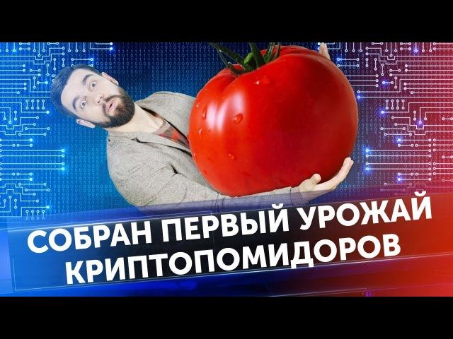 Виталий Бутерин выводит Plasma / Инвестиции в криптовалюту / Майнинг НЕ запрещен / Новости Coinbase