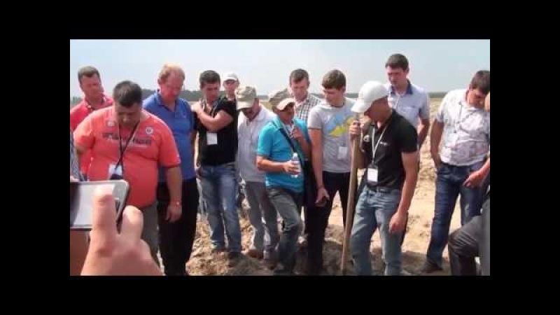 Національний День картоплі розкрив секрети, як вирощувати якісну картоплю в Україні