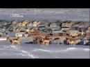 Великие миграции 5 серия из 7 Гонка на выживание Great Migrations 2010