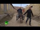 [Native Dagestan] Репортаж Russia Today о дагестанской кухне. Американец в Дагестане