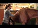 Equine Massage Demo