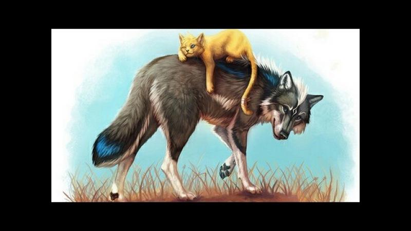 Волчица играет с кошкой BEST VIDEO
