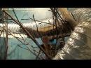 Philadelphia Zoo Striped Weasel Runs Through Tube 2
