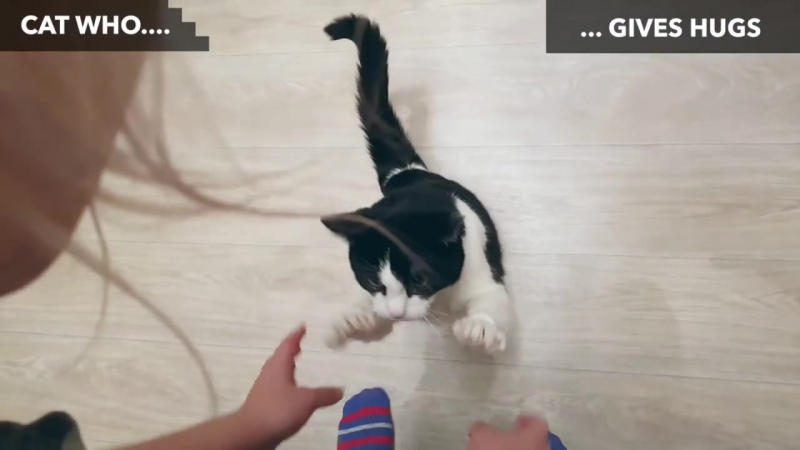 CAT WHO… CAN DO INCREDIBLE THINGS