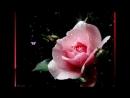 Музыка роз. Прекрасно Божье создание