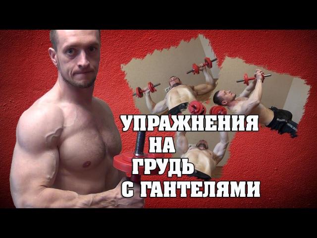 Упражнения для груди с гантелями eghf;ytybz lkz uhelb c ufyntkzvb