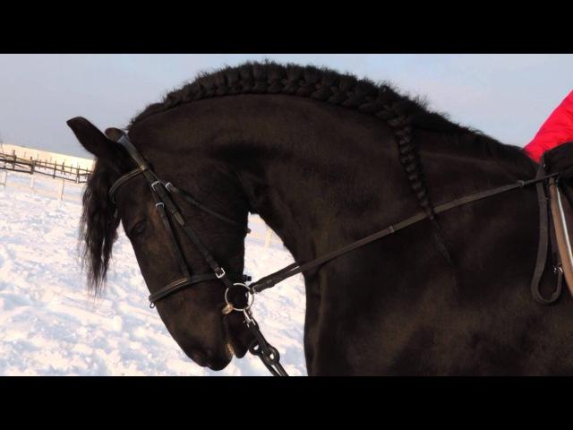 Верхом на фризе - On the Friesian horseback