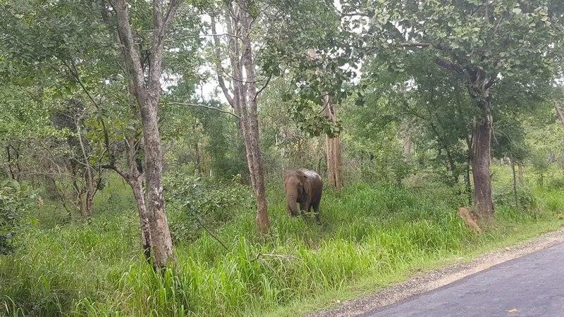 Дикий слон на Шри-Ланке