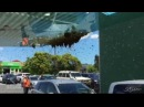 Пчелы атаковали людей в городе Покекохе | | Roy bees attacked people on the street Juwala Singh Lan