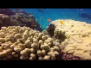 Красное море 2014 апрель