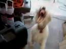 Собака уебака