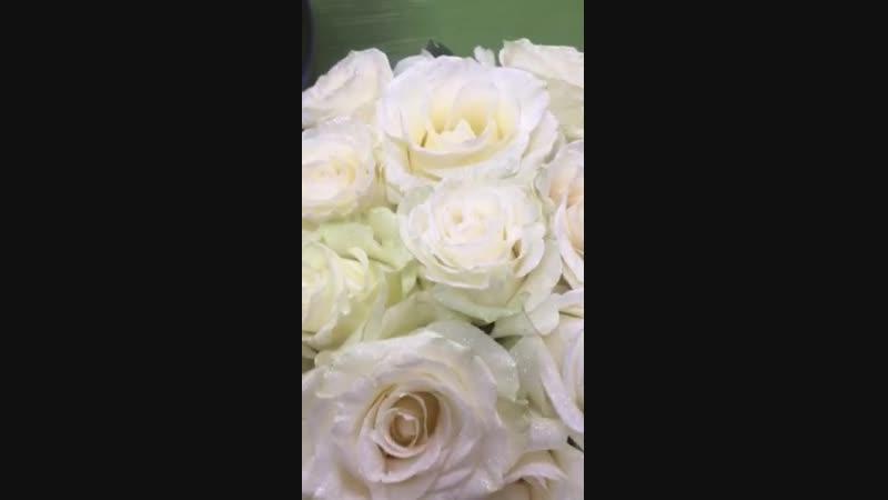 розы мондиаль экв.