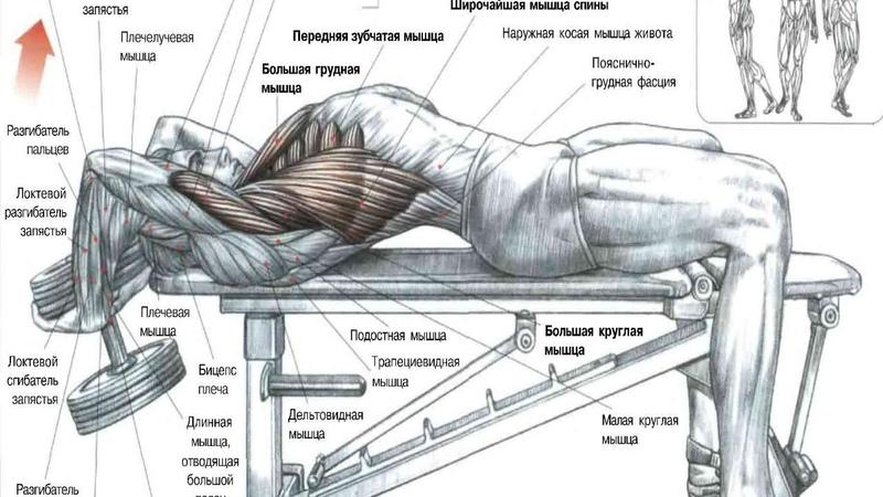 Какие мышцы тренировать вместе rfrbt vsiws nhtybhjdfnm dvtcnt