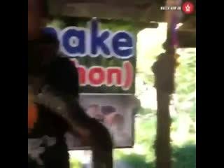 Начал паниковать когда змея обхватила шею