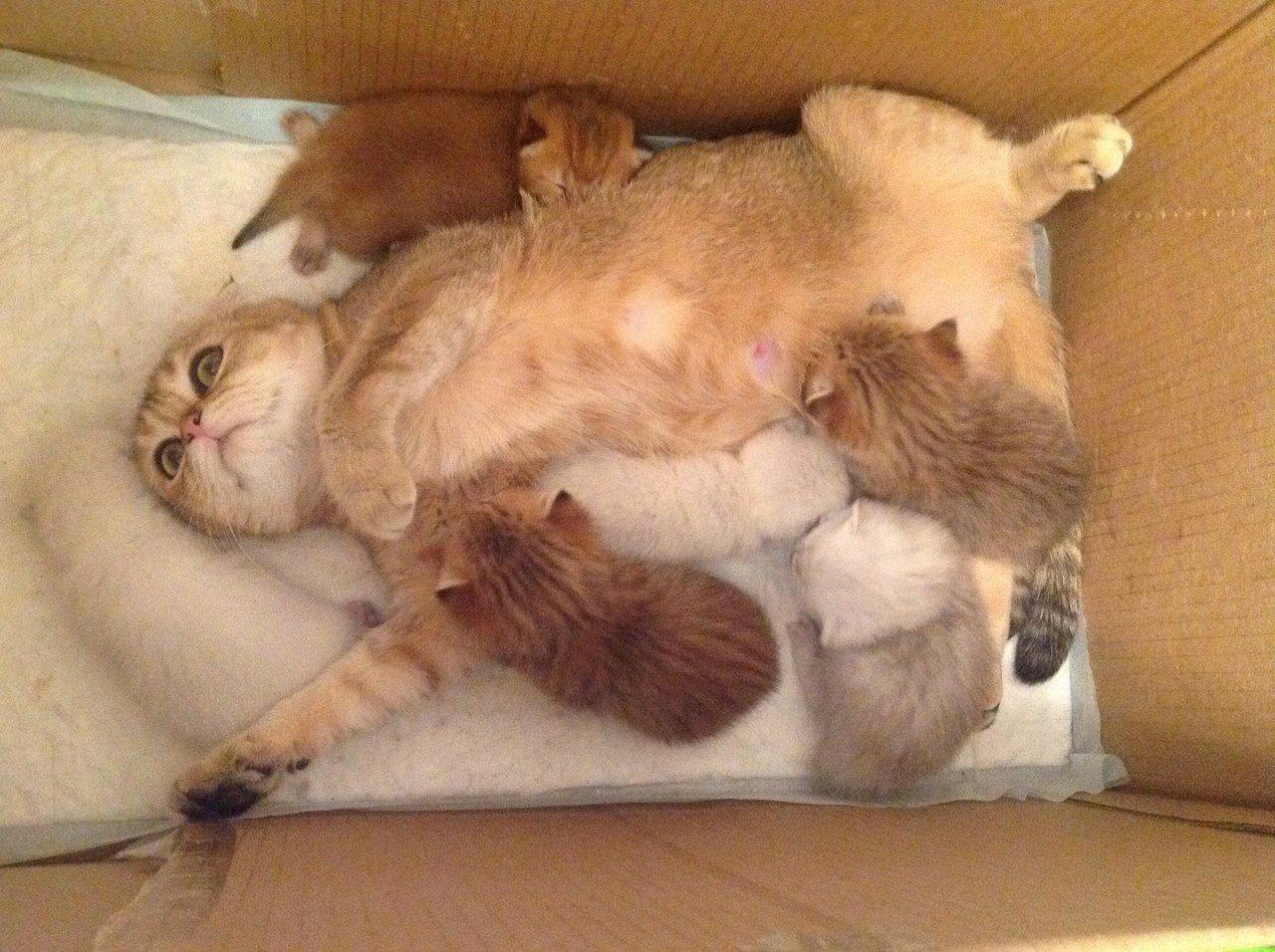 Будни мамы кошки