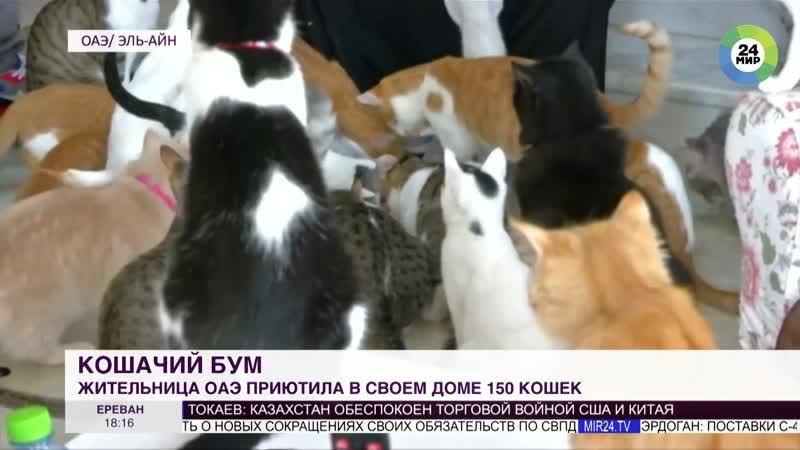 Жительница ОАЭ приютила в своем доме 150 кошек