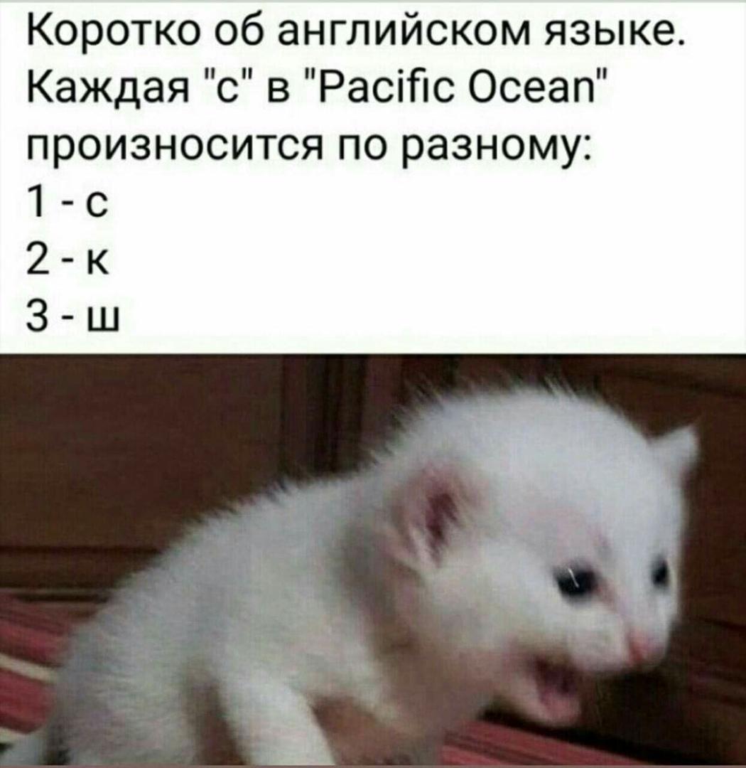 https://sun1-16.userapi.com/c854524/v854524514/aeaa3/KKPxlhSn_K4.jpg