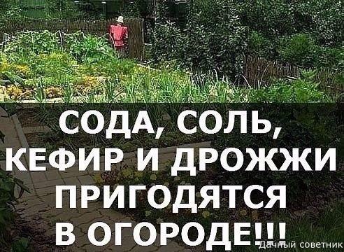 СОДА, СОЛЬ, КЕФИР И ДРОЖЖИ ПРИГОДЯТСЯ В ОГОРОДЕ!!!