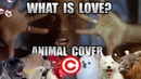 Haddaway What Is Love Animal Cover REUPLOAD
