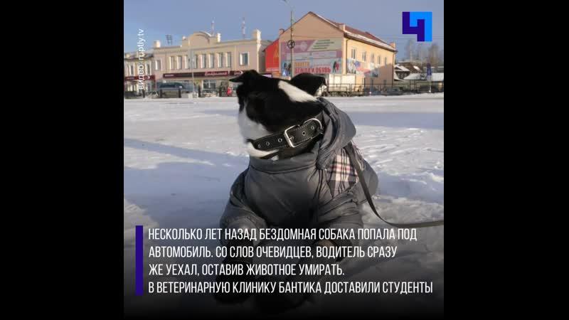 История пса-инвалида по кличке Бантик