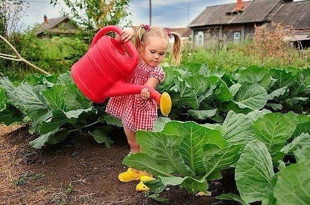 ПРАВИЛЬНЫЙ ПОЛИВ ОВОЩЕЙ. У правильного полива три основных условия: своевременность, регулярность, норма. Как их надо применять для разных овощей летомПолив огурцов сверху или в бороздкуКорни
