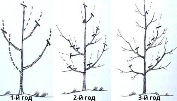 Общие правила обрезки деревьев
