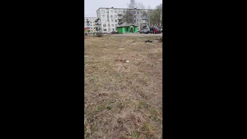 Собака инвалид брошена вчера в Лопухинке у мсгазина