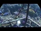 PlayStation VR Опасное погружение Живая природа