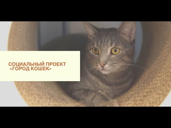 КУДРОВО LIFE 11 СОЦИАЛЬНЫЙ ПРОЕКТ ГОРОД КОШЕК