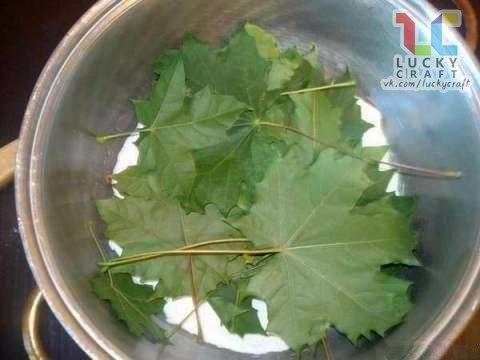 Рецепт для детского творчества: Скелетирование листьев Скелетирование листьев - процесс несложный, но требующий терпения и аккуратности. Всё, что нам потребуется это - листья (лучше собирать