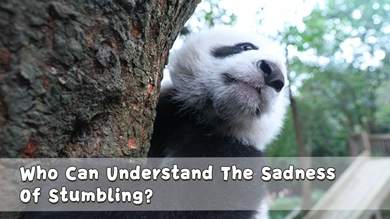 Who Can Understand The Sadness Of Stumbling?   iPanda