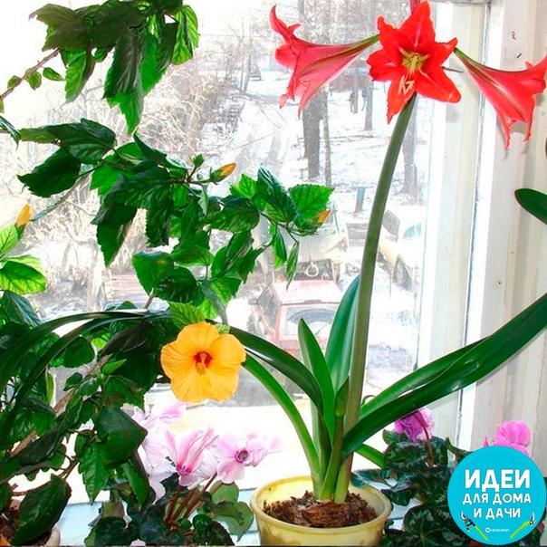 Интересная подкормка для домашних цветов!