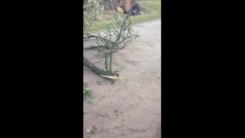 Могилёвский район деревня Будище Последствия урагана