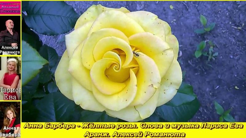 Анна Барбера Жёлтые розы Слова и музыка Лариса Ева Аранж А Романюта