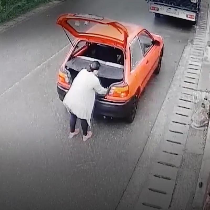 Женщина выкинула кошку вместе с котятами в пакете и уехала